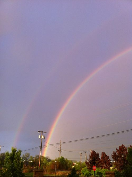Double bow 1