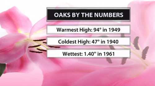 4-24 oaks by the numbers